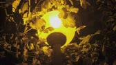 calçada : Street lamp under a tree at night in the dark with yellow light close-up.