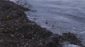 thyroid : Kamka seaweed on the sand beach at sunset. Stock Footage
