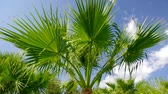 subtropics : Palm tree against a blue sky