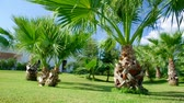 subtropics : Beauty palm-trees in Antalya, Turkey.