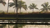 abandonar : Beautiful view of flooded rice paddy field with a road during sunrise in India Stock Footage
