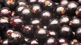 black currant : UHD macro of organic black currant berries on a rotating stand Stock Footage