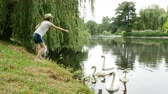 mere : Girl in panama feeds swans on the lake in the summer park