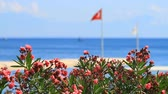 Oleander flowers and Turkish flag in Kemer Stok Video