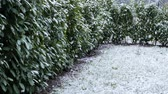 papa : Snow falling down in home garden, winter season, cold temperatures, scenic setting.