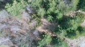 Aerial: drone descending and yawing over scattered forest, slow rotating view, deforestation issue