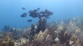tubos : A group of black fish floatig around pipe coral on the reef