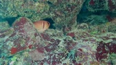 roatan : Longspine squirrelfish in the coral hole