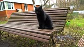 orelhas : Black cat sitting on a bench Stock Footage