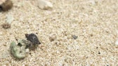 коралловый : small hermit crab walking around at beach sand