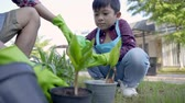 spade : hand planting a new plant on pot. gardening activity