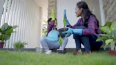 veranda : asian mom and her son planting a plant at home garden