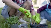spades : hand planting a new plant on pot. gardening activity