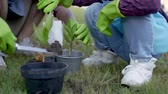 horticultura : hand planting a new plant on pot. gardening activity