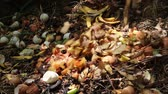 fertiliser : Food scraps compost heap. Compost is organic matter that has been decomposed and recycled as a fertilizer and soil amendment Stock Footage