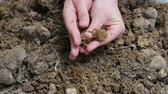 nourish : Composting animal manures. Manure composting. The hands of a farmer