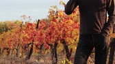 vinařství : Winemaking. Man tasting wine. The vineyards and winery. Wines of Autumn