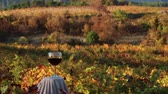 vinná réva : A glass of red wine. Wines of autumn. Autumn in the Vineyard