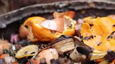 fertiliser : Food scraps compost heap. Organic ingredients intended for composting