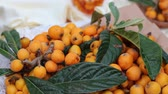 ameixa : Loquat leaves and fruits. Eriobotrya japonica, Chinese plum, Japanese plum, Japanese medlar, Pipa, Nispero, and Maltese plum