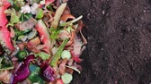 leftover : Recycle kitchen waste with the help of earthworms. Turning Food Waste Into Compost. Backyard composting. Vegetable and fruit wastes Stock Footage