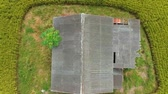 Footage of Aerial view of abandoned old wooden house in the middle of paddy field.