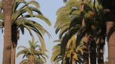 obuwie : Palm Tree (Casablanca Morocco) Casablanca City Square. Morocco.