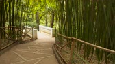 liána : The path leads through a bamboo grove. You can also see a marble bridge Dostupné videozáznamy