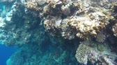 dahab : Coral reefs near the Blue Hole. Blue Hole is a diving location on east Sinai, a few kilometres north of Dahab, Egypt on the coast of the Red Sea. Stock Footage