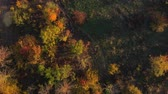 l air : Path among autumn trees. Aerial drone shot