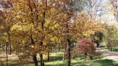 couleur : Sunny day. Autumn trees in a public park.
