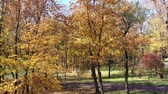 couleur : Autumn trees in a public park. sunny day