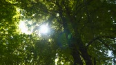 brilhar : The suns ray shines through the foliage of the tree