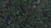 selva : Aerial view of Amazon forest, Brazil