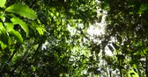 selva : Amazon Rainforest, Brazil Stock Footage