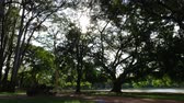 com sombra : Beautiful day in Ibirapuera Park in Sao Paulo, Brazil