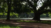 Beautiful day in Ibirapuera Park in Sao Paulo, Brazil