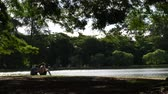 com sombra : SAO PAULO, BRAZIL - CIRCA FEB 2017: Beautiful day in Ibirapuera Park in Sao Paulo, Brazil Stock Footage