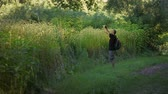 ormanlar : Nature photographer taking above the shoulder photo in tall grass Stok Video