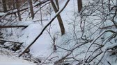 geada : 0729 Fresh Snow in the Forest and Trees at Sunset.mov Stock Footage