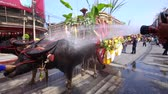CHONBURI,THAILAND-2019, OCTOBER 12: Parade of Buffalo racing festival in Thailand. Every year, farmer will bring buffalo to race for fun before farming season. Culture of farmer in CHONBURI, THAILAND. Vídeos