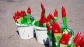 bristles : Lots of used brushes to paint in white plastic buckets Stock Footage