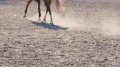 passos : Foot of horse running on the sand at the training area, close-up of legs of stallion galloping on the ground, slow motion Stock Footage