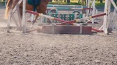 equitation : Foot of horse running on the sand at the training area, close-up of legs of stallion galloping on the ground, slow motion Stock Footage