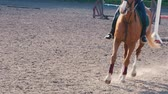 žokej : Foot of horse running on the sand at the training area, close-up of legs of stallion galloping on the ground, slow motion Dostupné videozáznamy