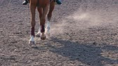 dressage : Foot of horse running on the sand at the training area, close-up of legs of stallion galloping on the ground, slow motion Stock Footage