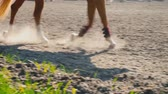 cval : Foot of horse running on the sand at the training area, close-up of legs of stallion galloping on the ground Dostupné videozáznamy