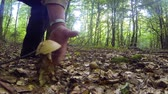 step : Collecting mushrooms in summer forest Stock Footage