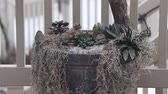 walka : Wild birds play and eat seeds in a backyard planter