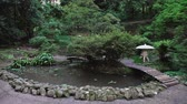 quioto : Japanese garden in the park, pond with floating red carp, walking bridges, tall trees and ferns Stock Footage